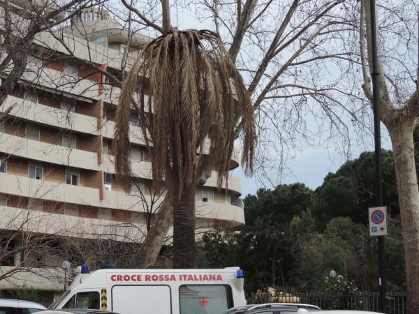 Pescara: palme infestate dal punteruolo rosso
