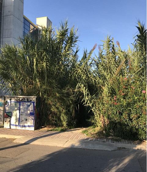 Degrado Strada Parco Pescara, la denuncia del M5S