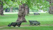 verde-pubblico11