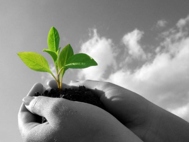 Educazione ambientale, dalla Giunta un Progetto per i Comuni