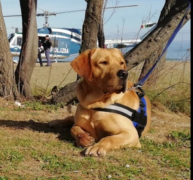 Pianella: cane poliziotto trova la pistola dell'omicida