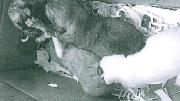 cuccioli11