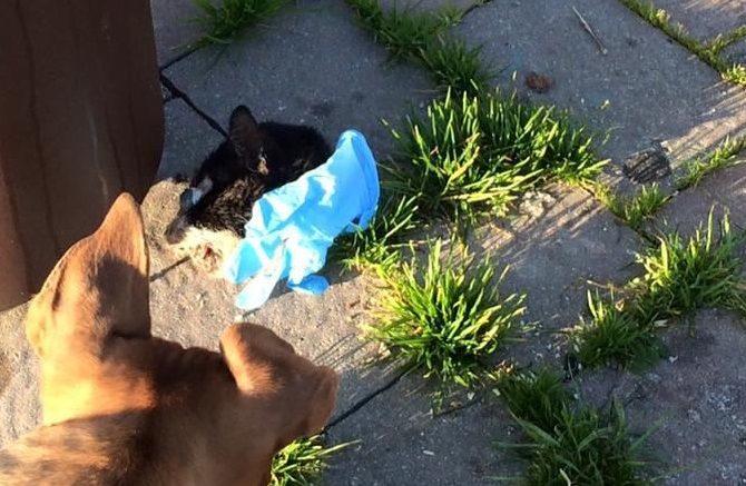 gatto-decapitato1