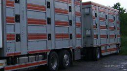 trasporto-animali1