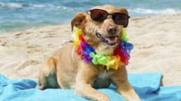 spiaggia-cani111