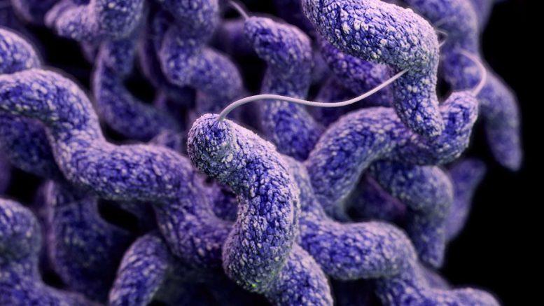 Malori a Pescara: responsabile un batterio della carne noto come Campylobacter