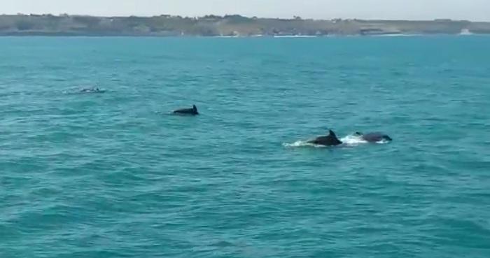 delfini11