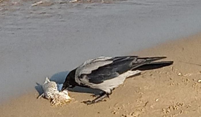 pesci-morti1